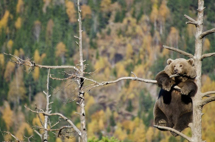 National-Geographic Nature Shots 2014