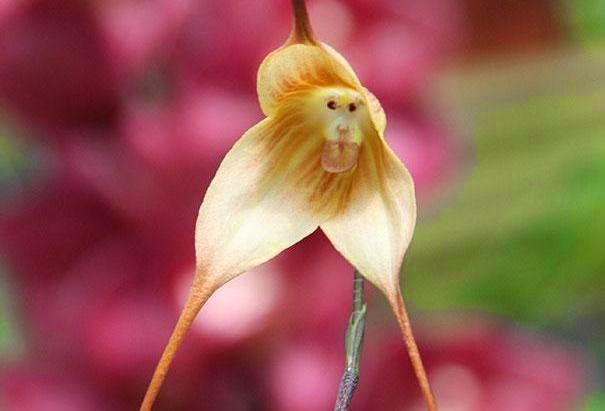 17 Strange Yet Beautiful Flowers Cool Indeed