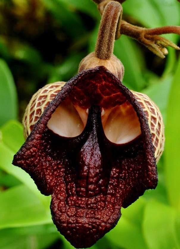 Strange yet beautiful flowers