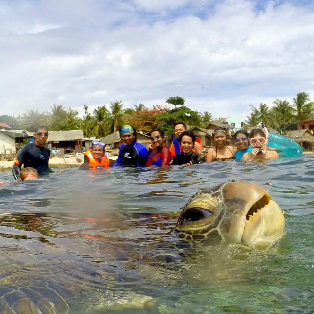 goofy_sea_turtle